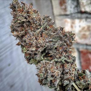 Black Lavender (Lemon Larry Lavender x Blackberry Kush) Big Buddy Seeds